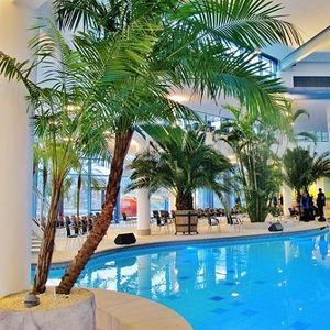 palms ornamental-plant