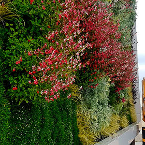green wall with live plants / modular-panel / natural / flower