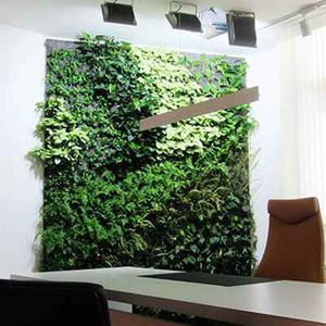 green wall with live plants
