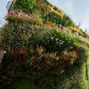 preserved green wall / with live plants / modular-panel / curved