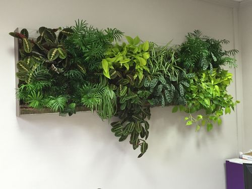 green wall with live plants / custom / natural / foliage