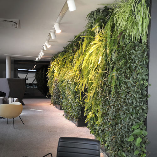 preserved green wall / with live plants / modular-panel / custom