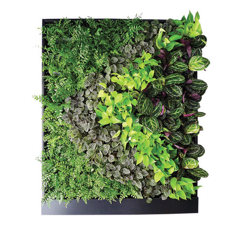 living frame with live plants