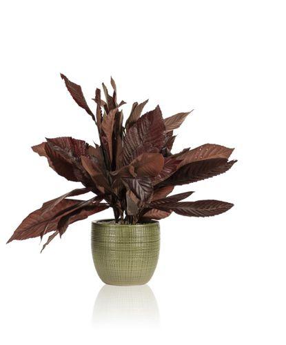 preserved ornamental-plant