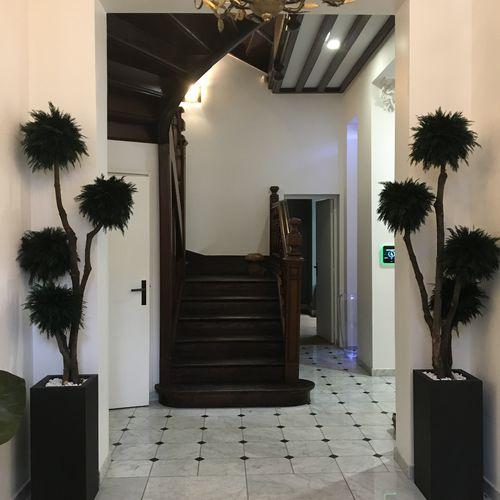 preserved ornamental-plant / spheres / cypresses