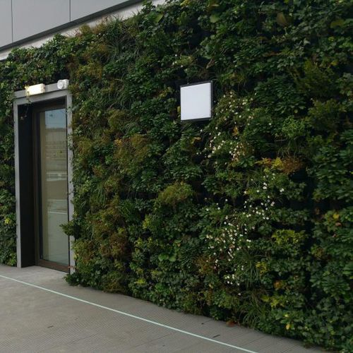 preserved green wall / modular-panel / garden / modular