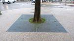 square tree grate / round / galvanized steel
