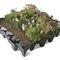 extensive green roof / flat / waterproof