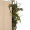 preserved plants room divider