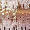 contemporary chandelier / crystal / stainless steel / incandescent