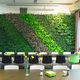 preserved green wall / with live plants / natural / indoor