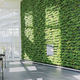 preserved green wall / with live plants / modular-panel / natural