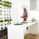 vertical garden with live plants / modular-panel / indoor / outdoor