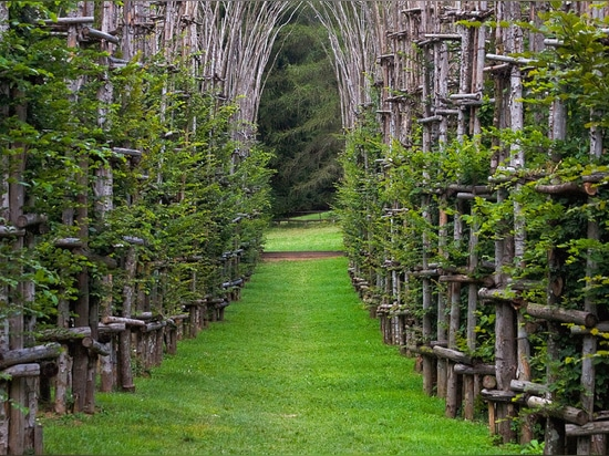 Cattedrale Vegetale is a cathedral made out of living, growing trees