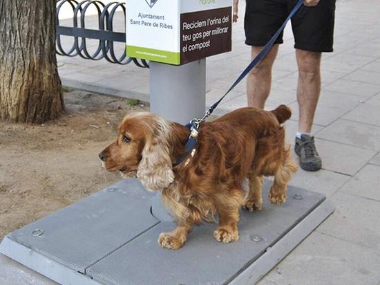 Urban Dog Urine Collector Installed
