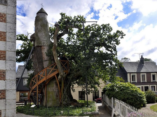 France's oldest tree, alive since Louis IX, hides treehouse chapels within its trunk