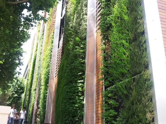 Performance of facade greening