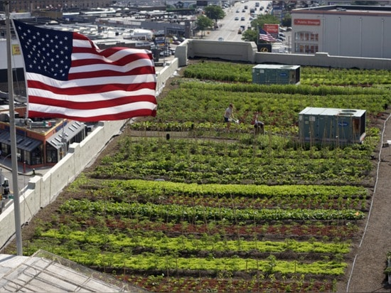 42,000 square feet urban farm created on new york rooftop