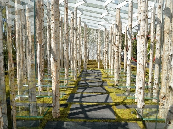 kengo kuma combines tree trunks and glass for the birch moss chapel in japan