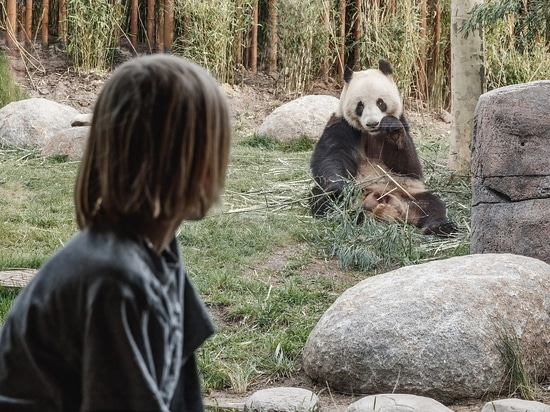 "The ""Bear"" Essentials: Copenhagen Zoo's New Panda Enclosure Makes a BIG Impression"