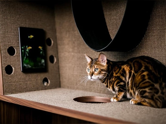 The Cat Flat Is A Large Piece Of Pet Furniture That's Designed To Not Look Out Of Place In A Contemporary Interior