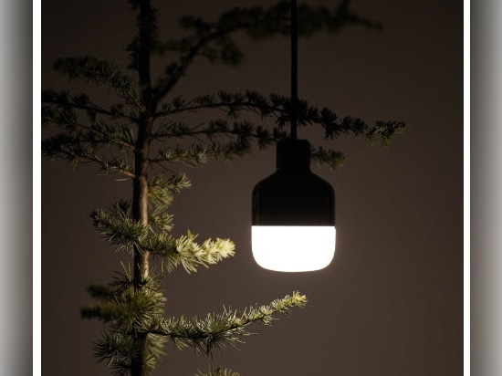 night view in a cedar tree