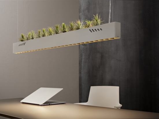 Pure BioAir, a Lamp by Olev that Sanitises Interiors