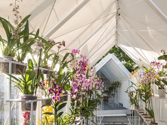 Greenhouse Orchid Punta del Este / Mateo Nunes Da Rosa