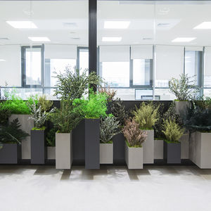安定観賞植物
